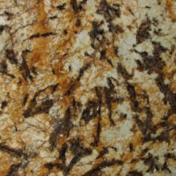 Splendor-Gold-Granite